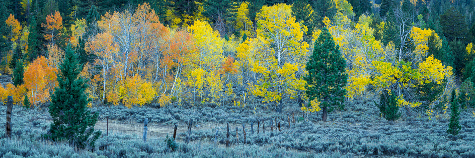 An image of fall colors in Hope Valley, CA