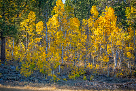 Gorgeous fall colors in Hope Valley California